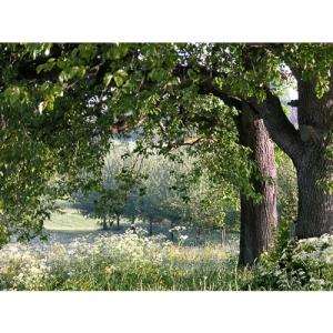 Stimmung im Obstgarten