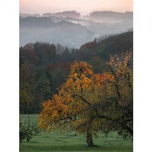 Herbststimmung mit Birnbaum