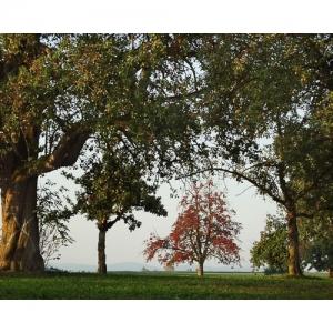 Herbststimmung mit Birnbäumen