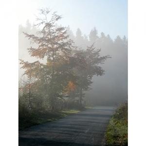 Weg in Herbststimmung