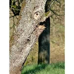 Zwerggesicht im Apfelbaum