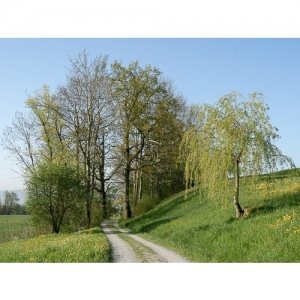 Feldweg mit Bäumen
