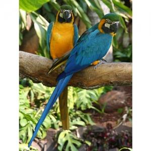 Papageien Ararauna