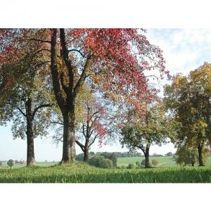 Landschaft mit Obstbäumen