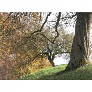 Obstbäume im Herbst