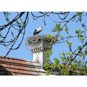 Storch auf Nest