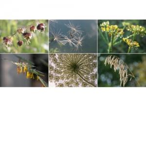 Gräser und Samenstände