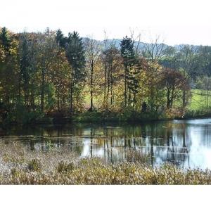 Herbstbäume am Wasser