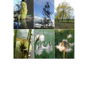 Naturimpressionen