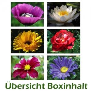 Sechser-Box: Gartenblumen