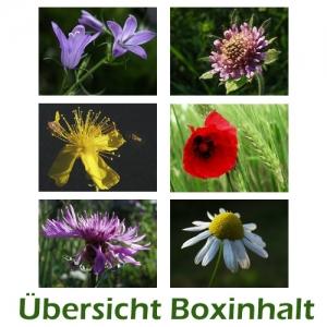 Sechser-Box: Wiesenblumen