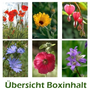 Sechser-Box: Blumen