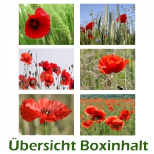 Sechser-Box: Mohn