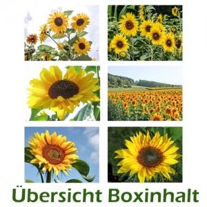 Sechser-Box: Sonnenblumen
