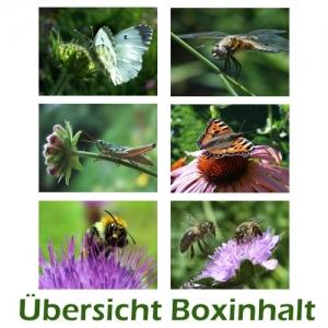 Sechser-Box: Insekten - Tiere