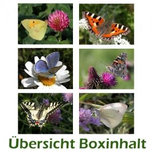 Sechser-Box: Schmetterlinge