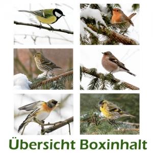 Sechser-Box: Vögel