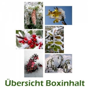 Sechser-Box: Wintermotive