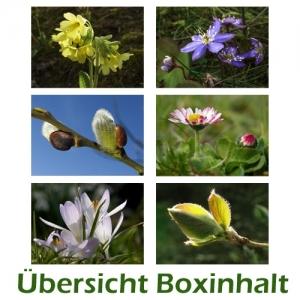 Sechser-Box: Frühlingsmotive