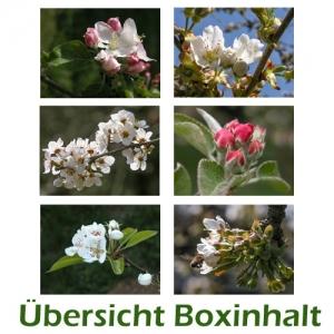 Sechser-Box: Frühling - Blütenzweige