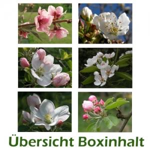 Sechser-Box: Frühling - Obstblüten