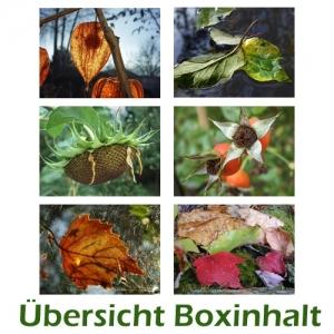Sechser-Box: Herbstmotive