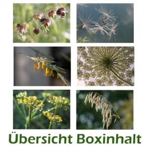Sechser-Box: Pflanzenmotive