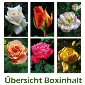 Sechser-Box: Rosen