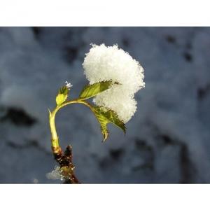 Schnee auf Rosenzweig