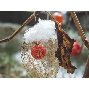 Laternchen mit Schnee