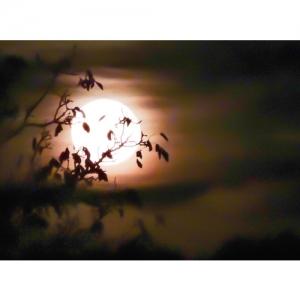Vollmondnacht - 2561