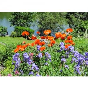 Blumen am Weiher