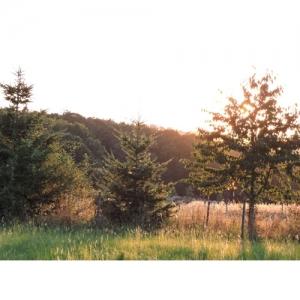 Landschaft im Abendlicht