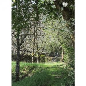 Weg im Naturgarten