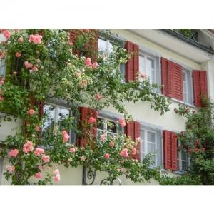 Haus mit Rosenschmuck