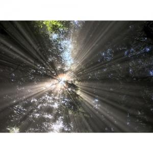 Lichtspiel in Baumkronen