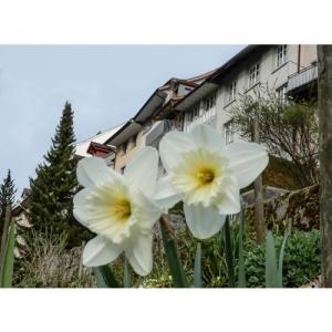 Wil SG - Blumen vor der Altstadt