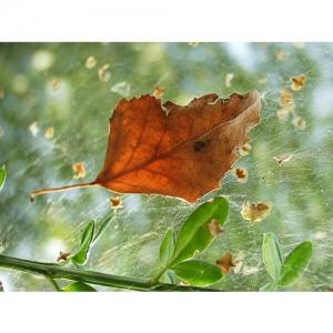 Birkenblatt im Herbst
