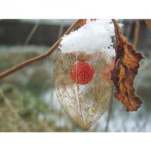 Laternchen im Winter