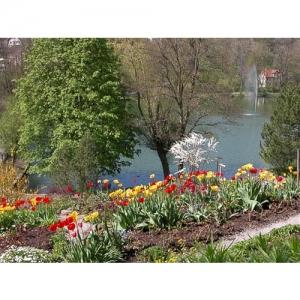 Frühling mit Tulpen