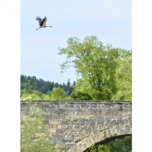 Storch über Thurbrücke