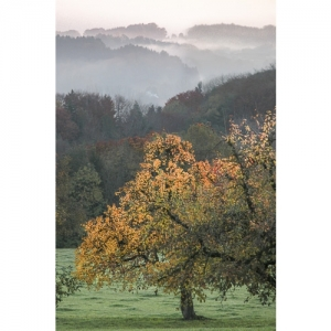 A 1105 Herbststimmung mit Birnbaum 90x60