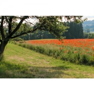 Landschaft mit Mohnfeld - 3088