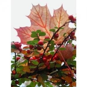 Herbststimmung mit Ahornblatt