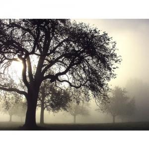 Nebel im Obstgarten