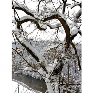 Baumherz im Schnee