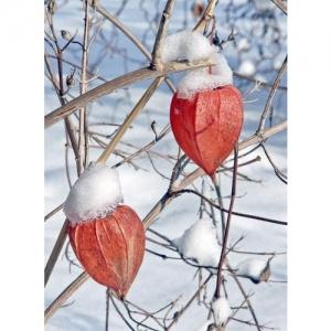Laternli im Schnee