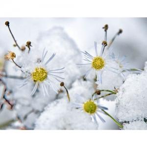 Feinstrahl im Schnee