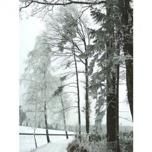 Bäume im Raureif