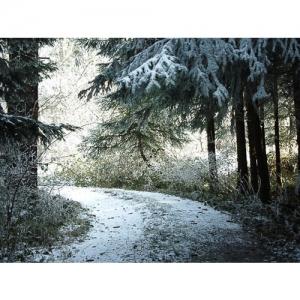 Raureif im Tannenwald